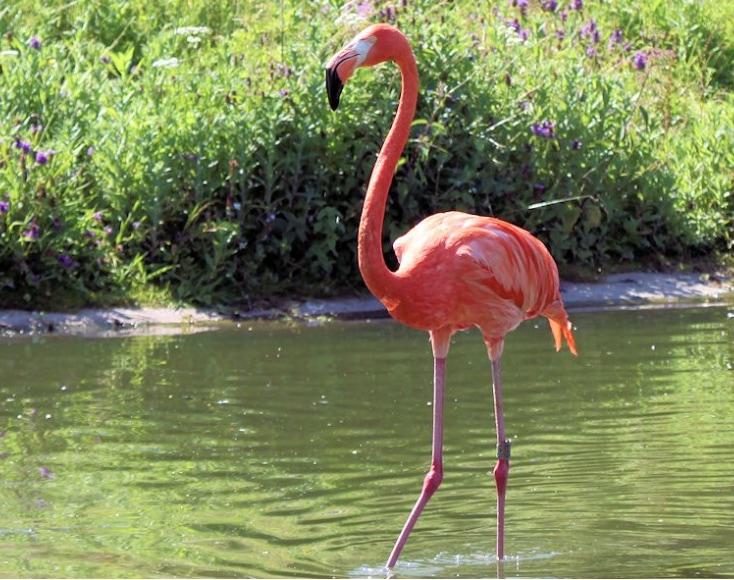Flamingo Placeholder 1